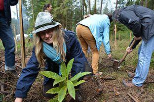 Tausend Bäume: Wir pflanzen einen Wald